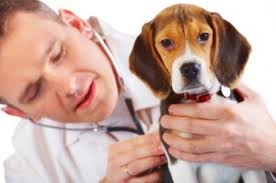 Veterinary Doctors in Jabalpur, India